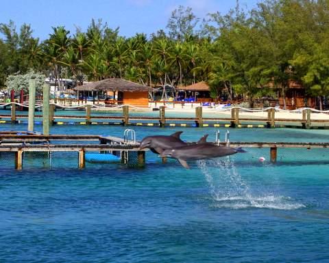 BlueLagoonDolphins