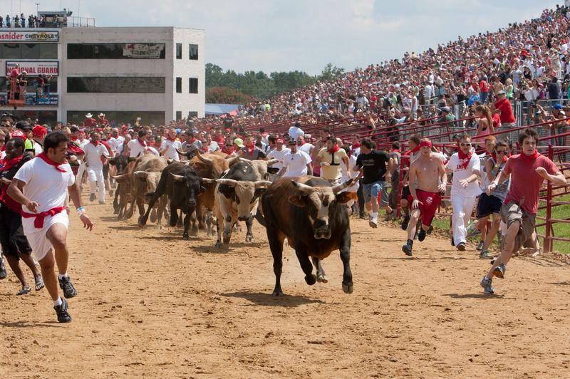Great-Bull-Run